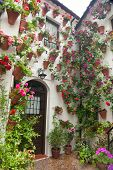 Flowers Decoration of Courtyard, typical house in Cordoba - Spain, Europe.