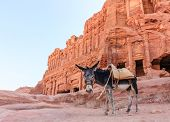 stock photo of petra jordan  - A Donkey stands in front of the ancient ruins of Petra Jordan at dawn - JPG