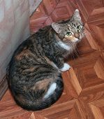 Tricolor Cat With Green Eyes Sitting On Floor