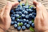Blueberries in the man's hands. Old wooden table.