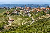 Vineyards on the hills and small town of Treiso on background in Piedmont, Northern Italy.