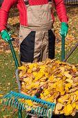 Leaves On Wheelbarrow
