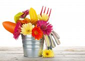 Colorful flowers and garden tools on wooden table. Isolated on white background