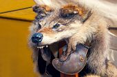 Antique Roman Helmet With Wolf Head On The Top