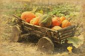 Retro image of old  wooden  cart with pumpkins.    Added paper texture