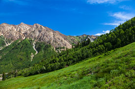 pic of snowbird  - Summertime in Little Cottenwood Canyon in the Wasatch Range of the Rocky Mountains Utah - JPG
