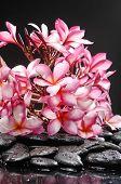 Black stone and branch frangipani