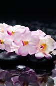 Set of branch pink orchid with therapy stones