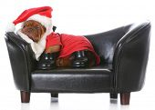 image of dogue de bordeaux  - tired santa  - JPG