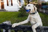 Cute Dog Playing With The Ball