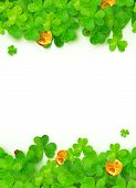 Green clovers with golden coins on white background