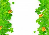 picture of triskele  - Green vector clovers with golden coins on white background - JPG