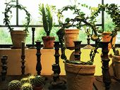 stock photo of plant pot  - Candles and green plants in clay pots decorating a window - JPG