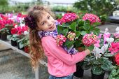 Beautiful girl holding flower pot with red hydrangea in the greenhouse