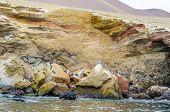 stock photo of ica  - Islas Ballestas, Peru - pelicans colony  - JPG