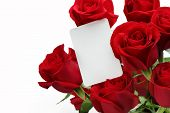 Bouquet of roses with blank gift card on white background