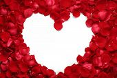 Heart of red rose petals isolated on white background