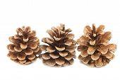 Three Pine Cones