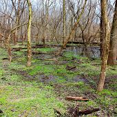 Kyte River Floodplain Forest Illinois