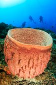 SCUBA divers and barrel sponge