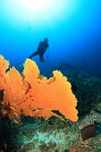 Scuba diver and coral underwater