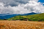 Wheat Heads On A Field With Mountains On A Background In Rural Area