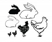 Sketch Of Chickens And Rabbits