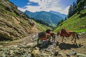 Grazing Horse in the mountains