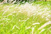 flower grass at relax morning time