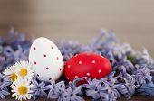 foto of primrose  - Two easter egs - JPG