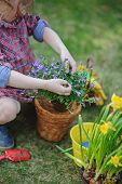 child girl in plaid dress planting bluebell and narcissus flowers in spring garden