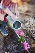 child girl in plaid dress watering pink hyacinth flowers in spring garden