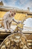 Monkey On The Temple In Nepal