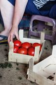 put tomatoes inside wooden basket