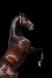 image of big horse  - Bay big horse isolated on black background - JPG