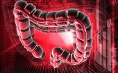 picture of intestines  - Digital illustration of large intestine in colour background - JPG
