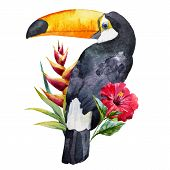 stock photo of toucan  - Beautiful vector image with nice watercolor toucan with flowers - JPG