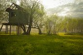 picture of unique landscape  - landscape of rural dandelion meadow with tree house during smokey afternoon - JPG