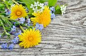 picture of eukaryote  - Dandelion and forget - JPG