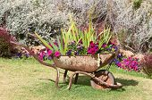 image of wheelbarrow  - New use for an old wheelbarrow  - JPG