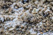 foto of hermit crab  - close up crab on a background of sand - JPG
