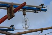 image of squid  - close up Squid fishing boat light bulb - JPG