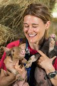 stock photo of conduction  - Veterinary with two pigs laughing after conducting an examination on the farm - JPG