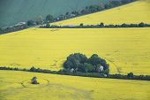 pic of rape-field  - Aerial photo of rape fields in Brandenburg county Germany middle of May - JPG