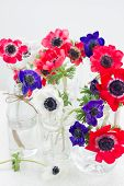 picture of windflowers  - blue - JPG