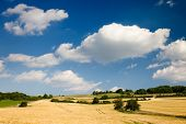 stock photo of hayfield  - agriculture summer landscape in front of clouded blue sky - JPG