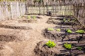 picture of risen  - Small vegetable garden with risen beds in the fenced backyard - JPG