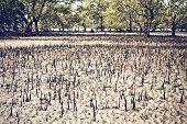 picture of ooze  - mangrove swamp at low tide in Thailand - JPG