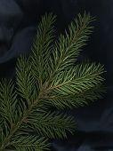 Spruce Still Life
