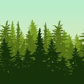 Vector Horizontal Seamless Background With Green Pine Or Fir-tree Forest. poster